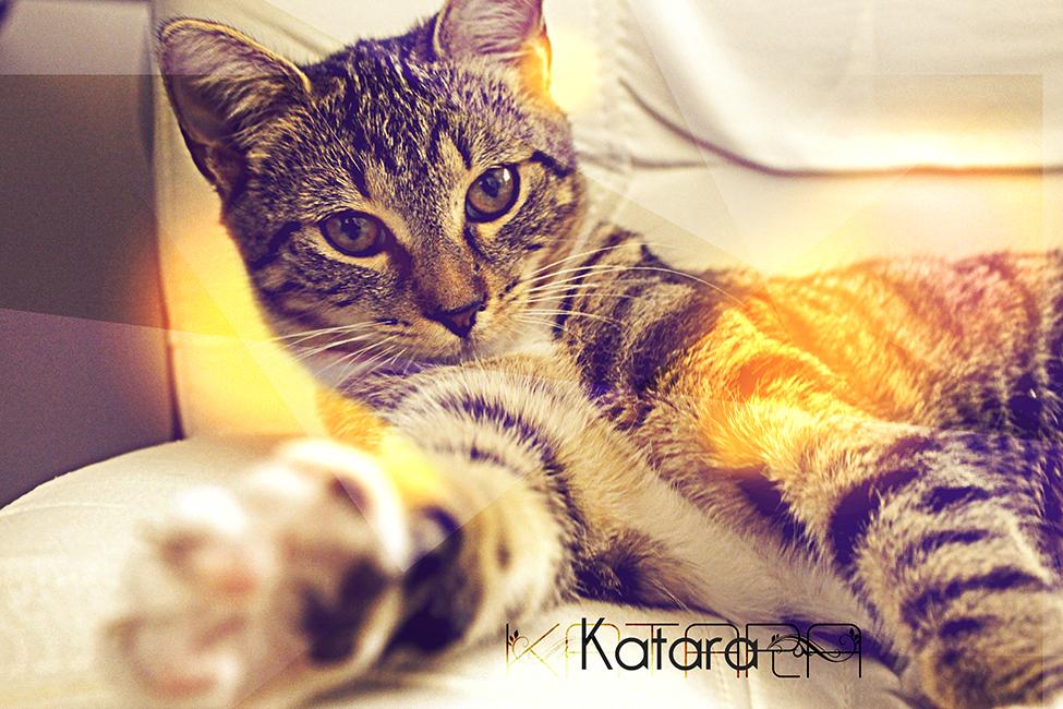 katara_01